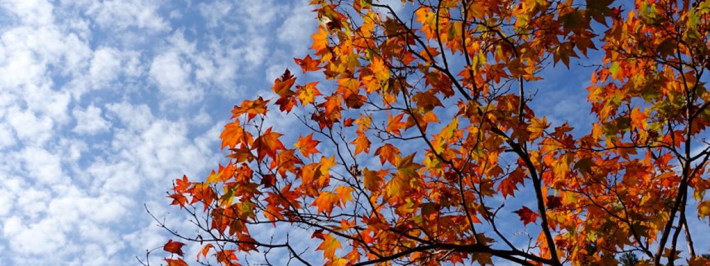 Le feste d'autunno in Umbria